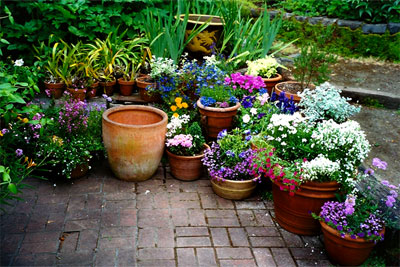 Potted garden - carlinsgardens