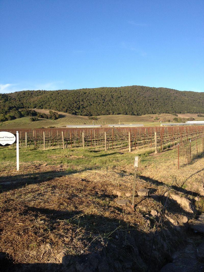 Scribe - vineyard