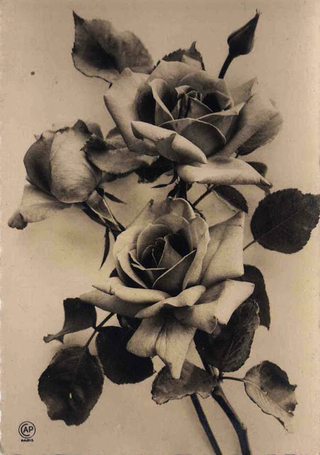 Sepia_roses